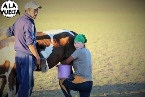 Odeñando a la yegua que provée la leche fermentada que a los mongoles tanto gusta y a los visitantes tanto les cuesta digerir.