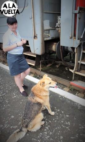 ¿Qué es más peligroso? ¿el perro o la provodnitsa?