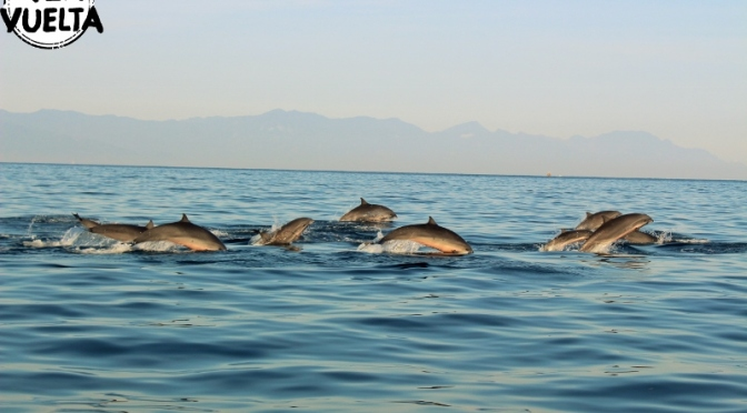 Cientos de delfines a nuestro alrededor